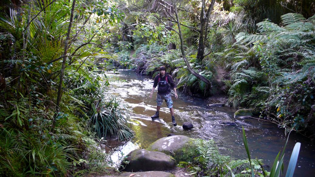 Waitakere Ranges – Mokoroa Stream Walk