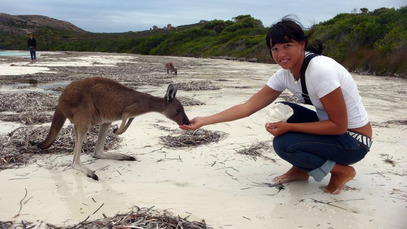 Wallabies am Strand