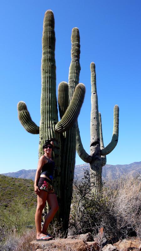 Saguaro Riesen Kakteen