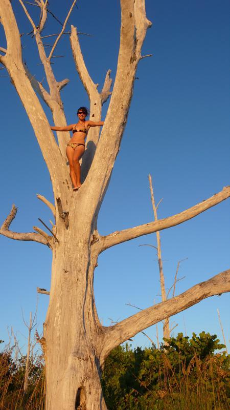 beach tree climbing