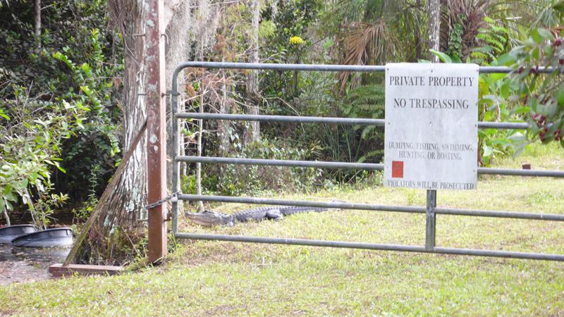 Alligator im Garten....
